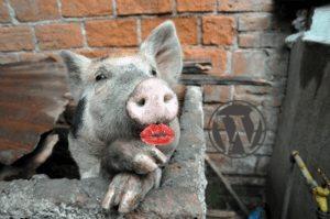 Slow WordPress Sites